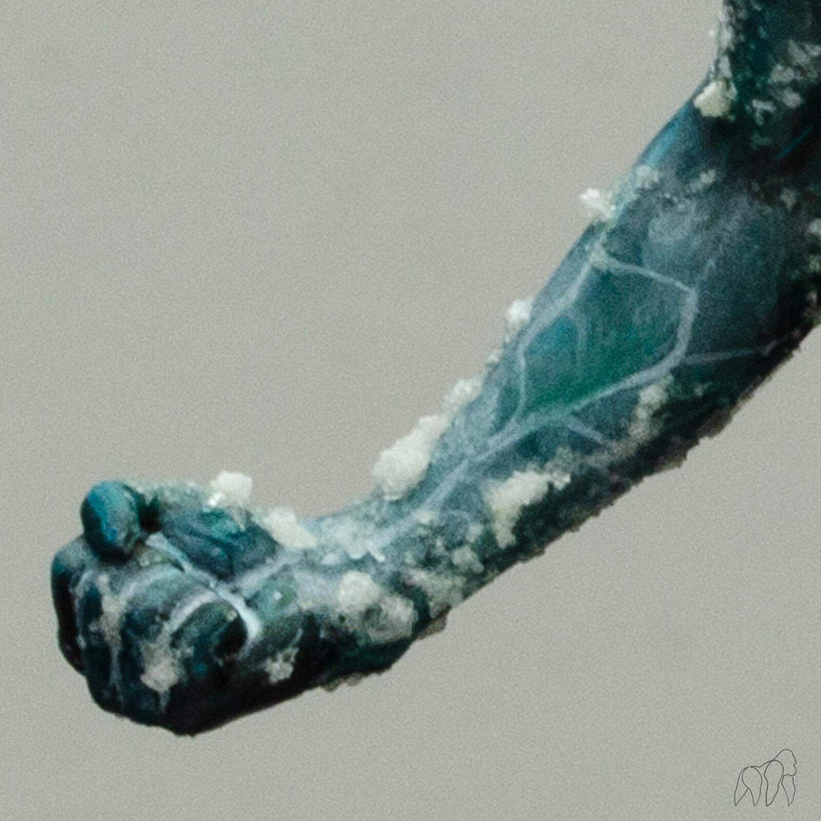 Iceboy03