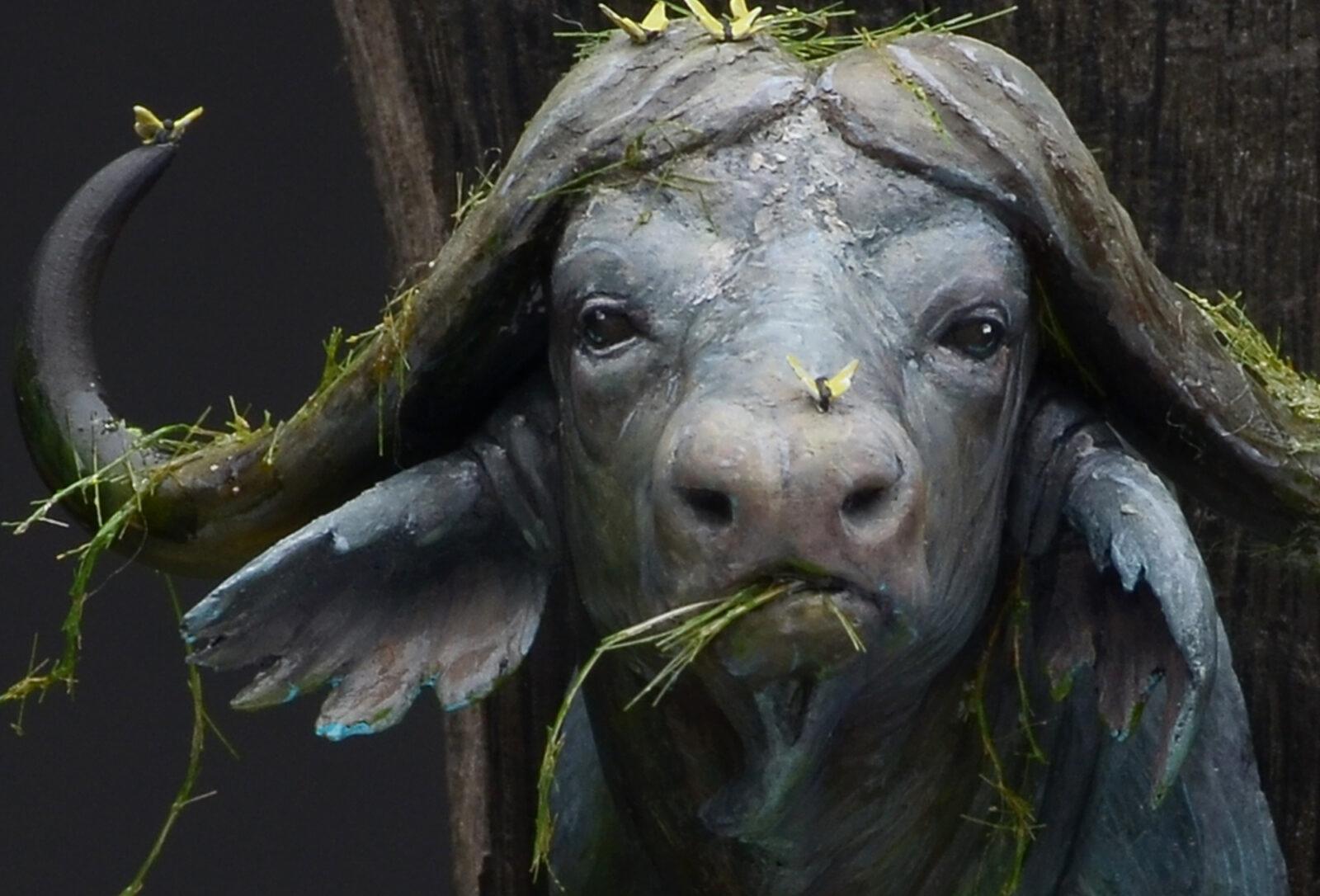 Waterbuffalo09
