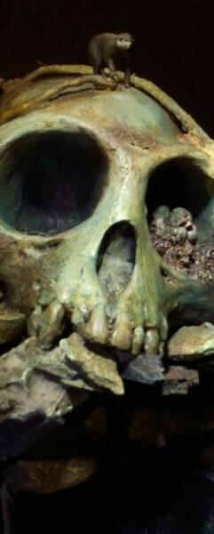 Skullcave  Thumb2